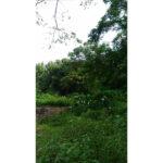 A4165天母自然別墅03