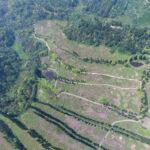 新竹北埔土地_四海一期空拍(南洋杉較疏範圍)較密為三期